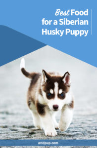 Best Food for a Siberian Husky Puppy