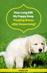 How Long Will My Puppy Keep Pooping Worms after Deworming