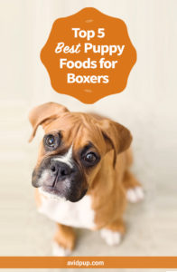 Top 5 Best Puppy Foods for Boxers