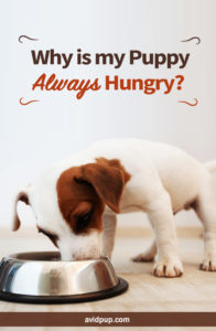 Why is my Puppy Always Hungry Crush the Cravings ..