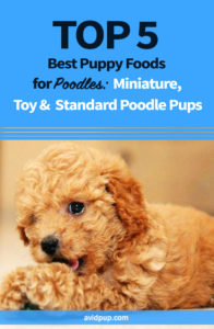 Top 5 Best Puppy Foods for Poodles Miniature, Toy & Standard Poodle Pups