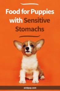Best Food for Puppies with Sensitive Stomachs (limited ingredient options)
