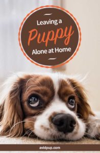 Leaving a Puppy Alone at Home for the First Time: 22 Tips to Prevent Issues