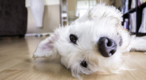 puppy alone at home laying up side down