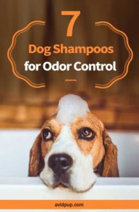 7 Best Smelling Dog Shampoos for Odor Control (for puppies & adults)