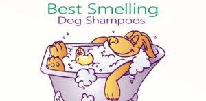 best smelling dog shampoos