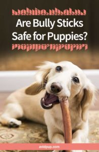 Are Bully Sticks Safe for Puppies?