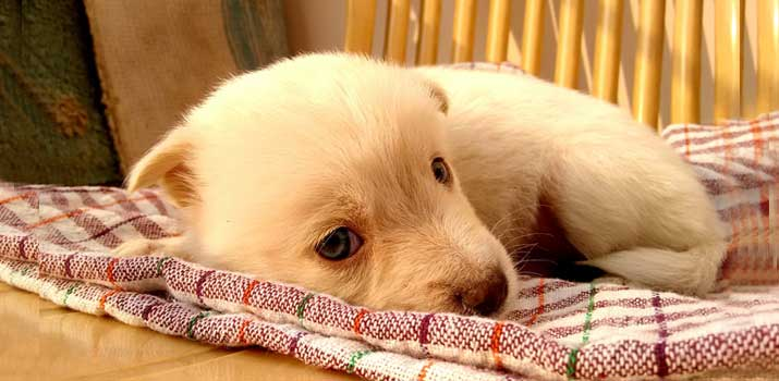 puppy that looks like he is feeling cold