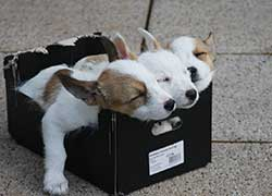 3 very young puppies in a carbon box (siblings)