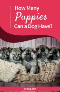 How Many Puppies Can a Dog Have? (determining litter size)