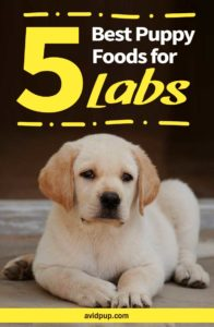 Top 5 Best Puppy Foods for Labs