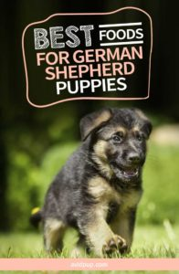 Top 7 Best Foods for German Shepherd Puppies (wet & dry)