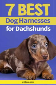 Top 7 Best Dog Harnesses for Dachshunds