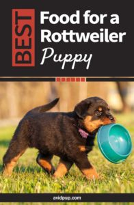 Best Food for a Rottweiler Puppy: Top 7 Picks (5 dry & 2 wet)