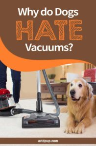 Why do Dogs Hate Vacuums?