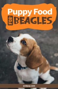 Best Puppy Food for Beagles: 7 Top Picks (5 dry & 2 wet)