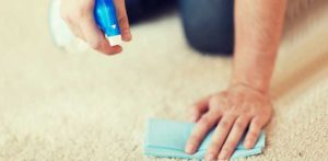 Cleaning pet stains from the carpet