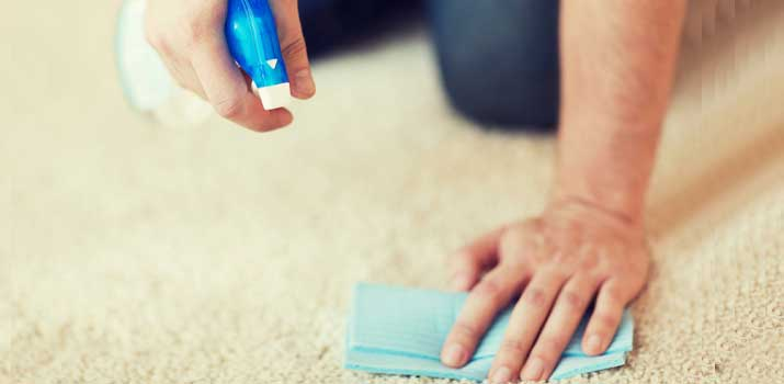 Top 7 Best Carpet Cleaners For Pet Urine Stains Odor