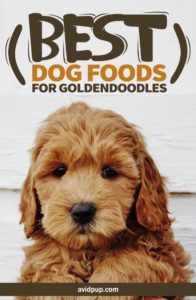 Top 7 Best Dog Foods for Goldendoodles, (Puppies & Adults)