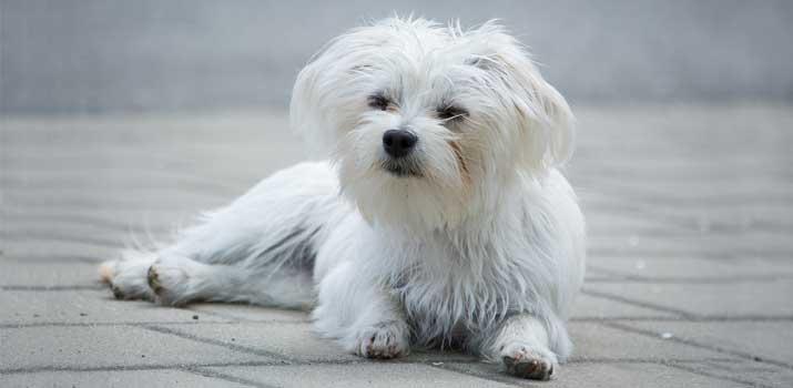 brushed and detangled dog