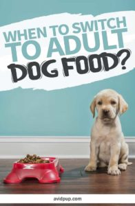 When is Your Puppy Ready to Switch to Adult Dog Food?