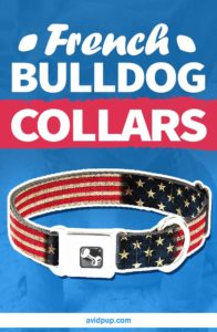 French Bulldog Collars – 5 Best Picks for Your Pup