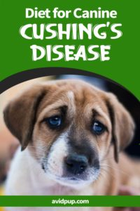 Recommended Diet for Canine Cushing's Disease