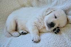10 week old pup