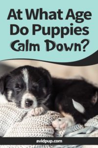 At What Age Do Puppies Calm Down