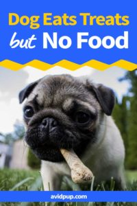 What to do When Your Dog Won't Eat His Food But Will Eat Treats