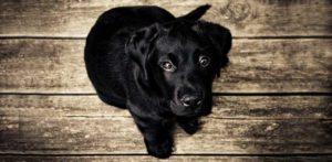 dog begging for treat but wont eat food