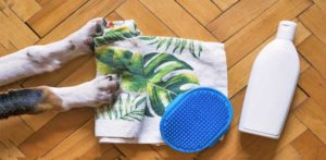 shampoo and towelfor a dog bath to soften the dogs fur
