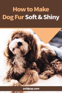 How to Make Dog Fur Soft & Shiny: 12 Tips for a Healthy Glossy Coat