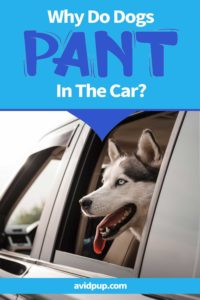 Why Do Dogs Pant In The Car? 6 Possible Causes & Solutions