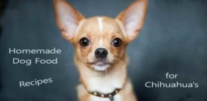 Homemade dog food recipes for Chihuahua's