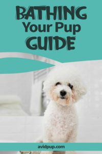Puppy's First Bath: Step by Step Guide to Bathing Your Pup