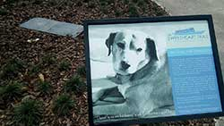 dog burried grave memorial