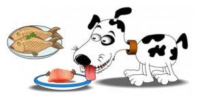 dog eating homemade dog food with fish