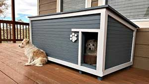 dog house near human home to protect it from wind and cold