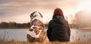 remebering a deceased dog