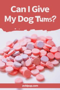 Can I Give My Dog Tums? Is it Safe?