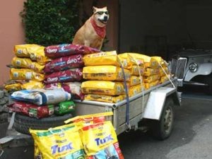 buying and storing dog food in bulk