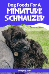 Best Dog Foods For A Miniature Schnauzer – From Puppy to Senior