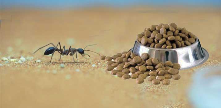 Ant crawling towards dog food bowl