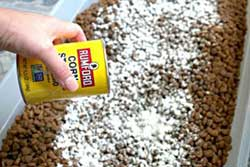 Use Cornstarch to Remove Existing Ants