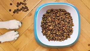 dirty dog food bowl