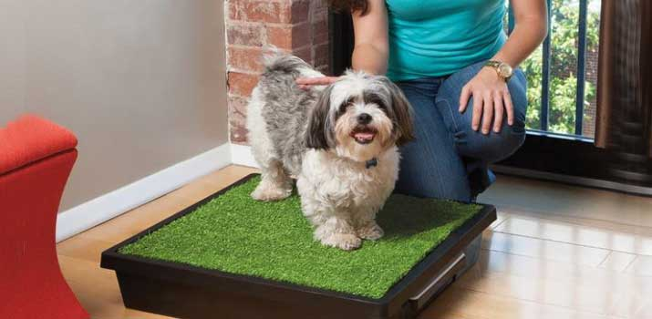 puppy sitting on an indoor dog potty from Petsafe