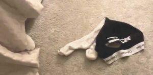 dog played with someone s underwear