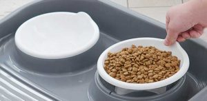 Pound of dry dog food to be divided in cups