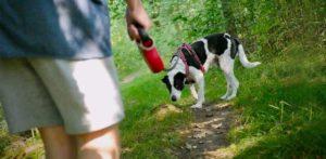 Walking a Dog After Neutering